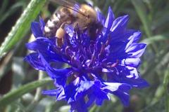 Szorgos méh - Usilovná včela, Varga Szabolcs, Királyhelmec (Kráľovský Chlmec), III. kategória