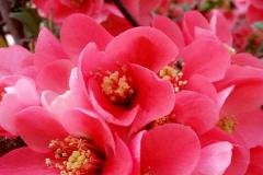 Bianka Kónyová , Rózsacsipke - Ružová čipka, II. kategória