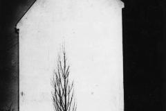 Egy magányos fa